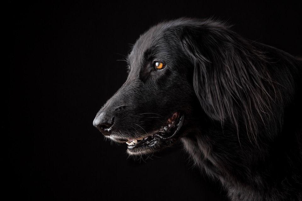 Teror Anjing Jadi-jadian Pada Perempuan Muda (1)