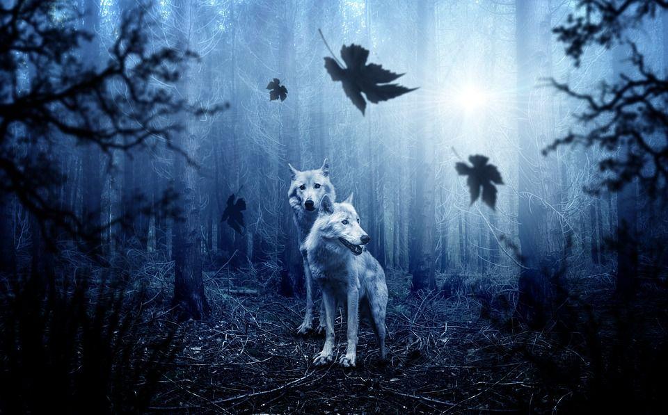 Teror Anjing Jadi-jadian Pada Perempuan Muda (2)